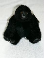 Black King/Kong